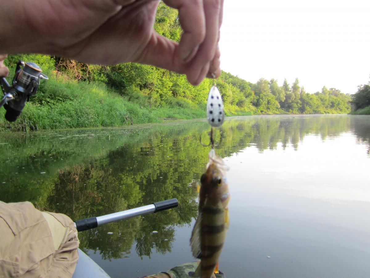 на реке медведица рыбалка
